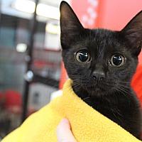 Adopt A Pet :: Piper - Sarasota, FL
