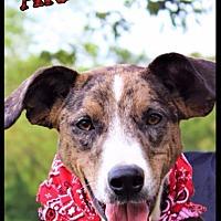 Adopt A Pet :: Arley - Batesville, AR