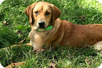 Shepherd (Unknown Type) Mix Dog for adoption in Danbury, Connecticut - Matilda