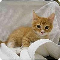 Adopt A Pet :: Red - Modesto, CA