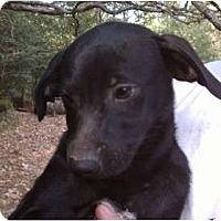 Adopt A Pet :: Becky - Salem, NH