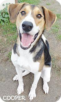 Foxhound Mix Dog for adoption in Lapeer, Michigan - COOPER--FOXHOUND CUTIE!