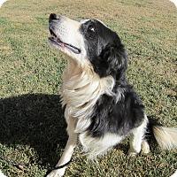 Adopt A Pet :: Spencer - Denver, CO