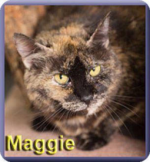 Domestic Shorthair Cat for adoption in Aldie, Virginia - Maggie