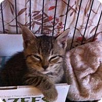 Adopt A Pet :: Pippen - Toronto, ON