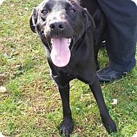 Adopt A Pet :: Punkin - Fayette City, PA