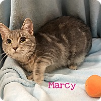 Adopt A Pet :: Marcy - Foothill Ranch, CA