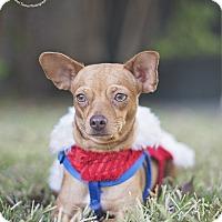 Adopt A Pet :: Honey - Kingwood, TX