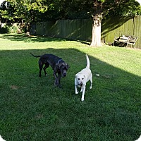 Adopt A Pet :: Stormy - Boonton, NJ