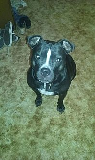American Pit Bull Terrier Mix Dog for adoption in Sioux Falls, South Dakota - Emmy