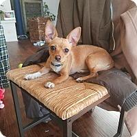 Adopt A Pet :: Carmella - Chicago, IL