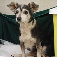 Adopt A Pet :: GLORIA - Waco, TX