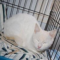 Adopt A Pet :: Little One - Brainardsville, NY