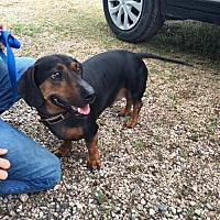 Adopt A Pet :: Sarge - York, SC