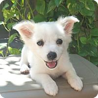 Adopt A Pet :: Utah - conroe, TX