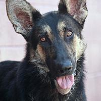 Adopt A Pet :: Greta von Gresser - Los Angeles, CA