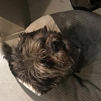 Adopt A Pet :: ZZ-Onyx *courtesy post - Rancho Santa Margarita, CA
