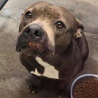 Adopt A Pet :: Dora - Kaufman, TX
