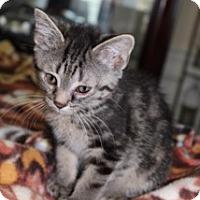 Adopt A Pet :: Beezus - Marietta, GA