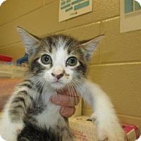 Adopt A Pet :: Arion - Irving, TX