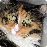 Adopt A Pet :: Kiwi - Carrollton, GA