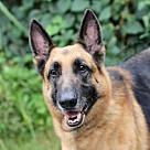 Adopt A Pet :: ZANTAR