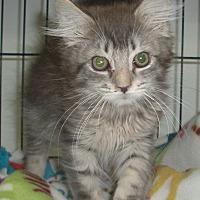 Adopt A Pet :: Edgar - Germansville, PA