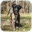 Photo 2 - Shepherd (Unknown Type)/Retriever (Unknown Type) Mix Dog for adoption in Mocksville, North Carolina - Toby