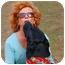 Photo 3 - Labrador Retriever Mix Dog for adoption in Preston, Connecticut - Boozer