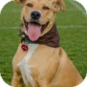 Labrador Retriever Mix Dog for adoption in Nashville, Tennessee - Indi