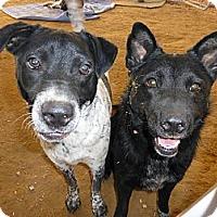 Adopt A Pet :: Princess - Katy, TX