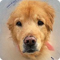 Adopt A Pet :: Midas - Jacksonville, FL