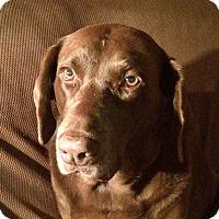 Adopt A Pet :: Molly - Wimberley, TX
