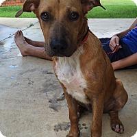 Adopt A Pet :: Rosie - Adopted! - Croydon, NH