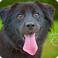 Adopt A Pet :: Luigi - Fort Valley, GA