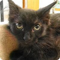 Adopt A Pet :: Ozzy - Milwaukee, WI