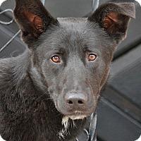 Adopt A Pet :: Briggs von Bretten - Los Angeles, CA