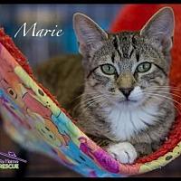 Adopt A Pet :: Marie - Richardson, TX