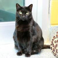 Adopt A Pet :: Ashes - Charleston, SC