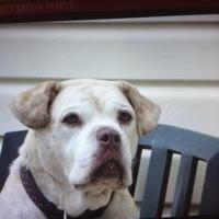 Adopt A Pet :: Elsie - Owatonna, MN