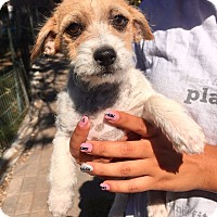 Adopt A Pet :: Valentina - Santa Ana, CA