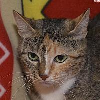 Adopt A Pet :: Chesapeake - Medina, OH