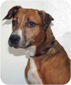 Shepherd (Unknown Type) Mix Dog for adoption in Port Washington, New York - Paisley