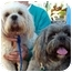 Photo 2 - Lhasa Apso Dog for adoption in Spring Valley, California - LINDSEY & KEELEY