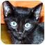 Photo 2 - Domestic Shorthair Kitten for adoption in Atlanta, Georgia - Linus