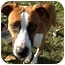 Photo 2 - Boxer Mix Puppy for adoption in Baton Rouge, Louisiana - Buttercup
