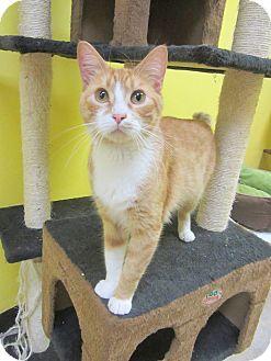 Domestic Shorthair Cat for adoption in Mobile, Alabama - Tweek