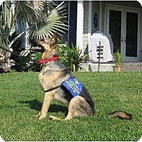 Adopt A Pet :: Kiera - Green Cove Springs, FL
