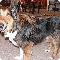 Adopt A Pet :: Jake - Minneapolis, MN