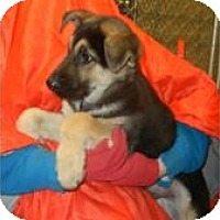 Adopt A Pet :: Balor ADOPTED!! - Antioch, IL